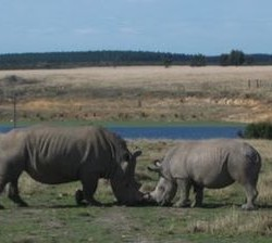 Exotic Location - Plett Game Reserve