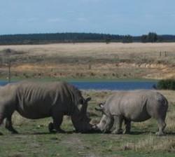 Exotic Location - Plett Game Reserve