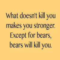 Recovery programme tips that work - Bears Will Kill You!