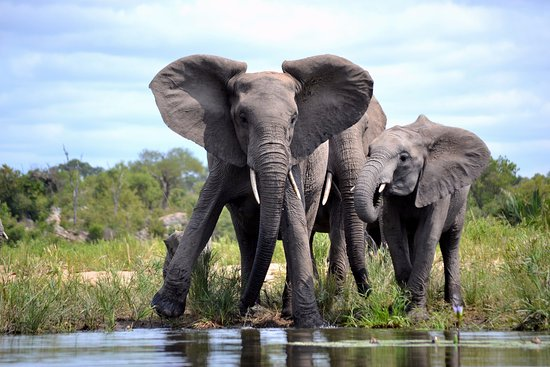 beautiful-elephant-sightings